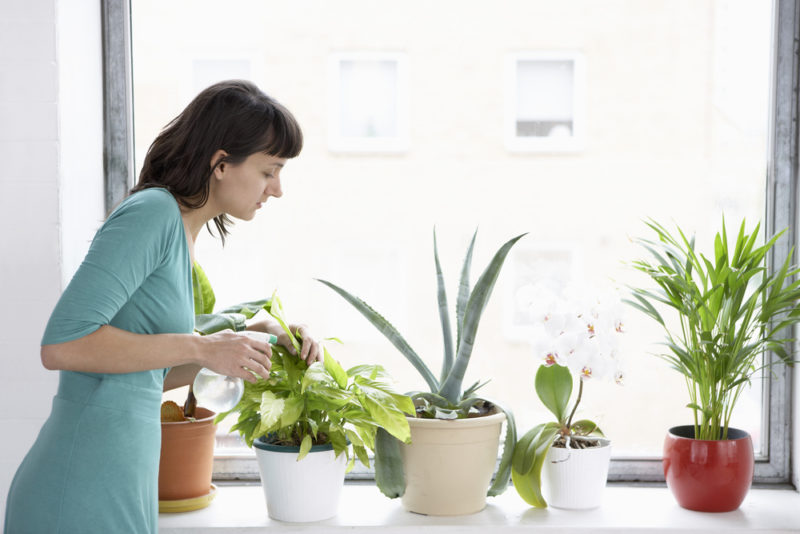 3 Plants That Will Improve Indoor Air Quality Year Round