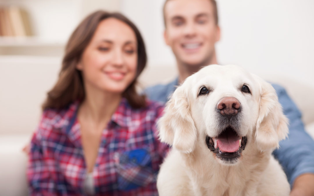 3 Ways to Reduce Pet Dander in Your Fort Myers Home
